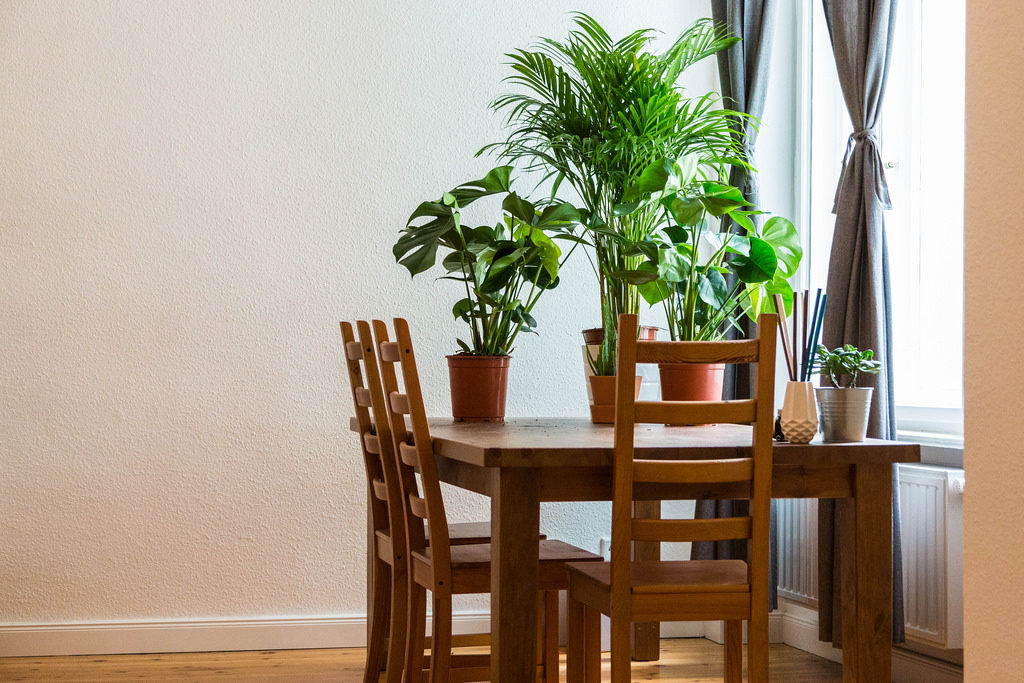 Finding Best Herbs to Grow Indoors at Home