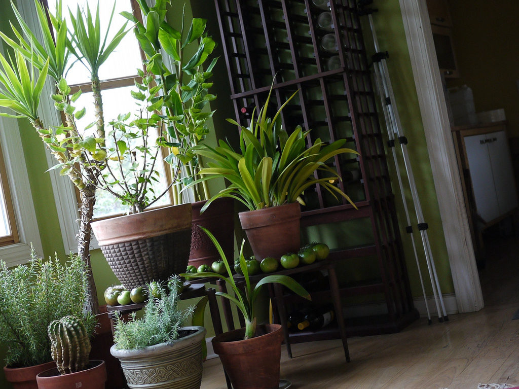 best herbs to grow indoors at home