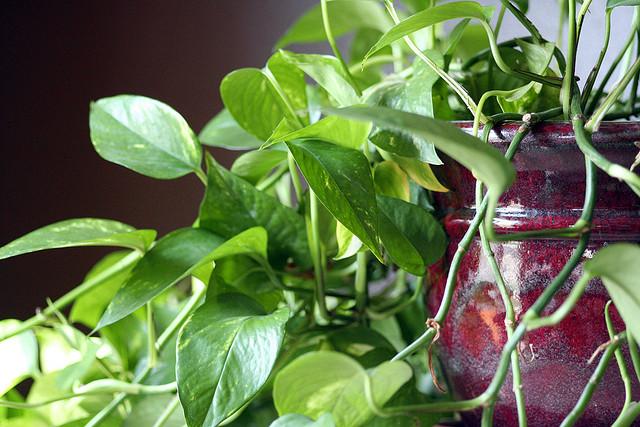 Houseplants Best Low Light Indoor Plants