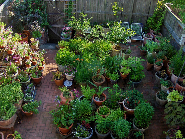 Container gardening ideas for your home garden for Small container garden ideas